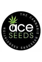 Venta de Semillas Ace Seeds ®   100% Feminizadas ¿Las quieres?