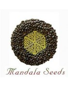 Mandala Seeds Regulares
