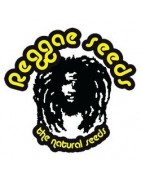 Reggae Seeds Regulares