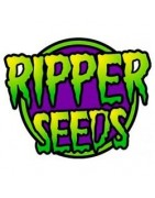 Ripper Seeds Regulares