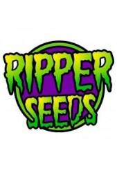 Semillas Regulares Ripper Seeds ¡Ya están disponibles!