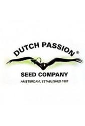 Semillas medicinales CBD Dutch Passion ¡Lo que estabas esperando!