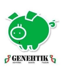Genehtik Seeds CBD
