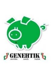 Semillas medicinales CBD Genehtik Seeds ¡Nuevas semillas!