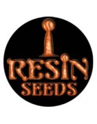 Semillas Resin Seeds CBD