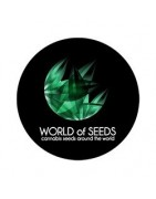 Semillas medicinales World Of Seeds