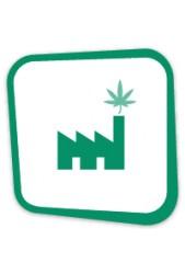 Comprar Semillas de Marihuana de Máxima Producción con Cogollos Grandes