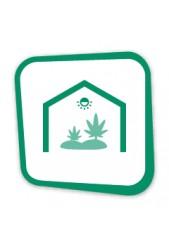 Comprar semillas de marihuana para interior baratas