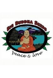 Semillas Big Buddha Seeds Feminizadas ® | Amplio catálogo ◁