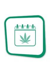 Venta de Semillas de Marihuana para fumar a diario