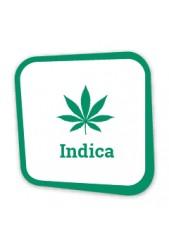 Comprar Semillas de Marihuana Índicas Baratas