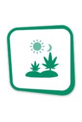 Comprar Semillas de Marihuana para Exterior Baratas | Top Precios