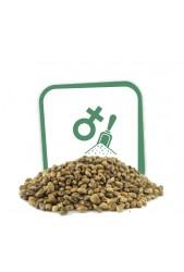 ••➤ Compra Semillas Feminizadas a granel Baratas ® Desde 1,9 € ✔