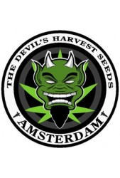The Devils Harvest Seeds ® Feminizadas | Comprar Online ✔