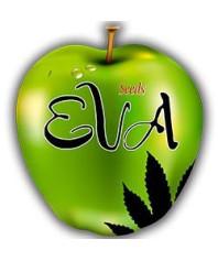 Semillas Eva Seeds Feminizadas online