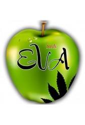 Semillas de Marihuana Eva Seeds ® | Rápida Floración ✔