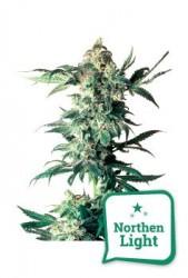 Semillas Northern Light online