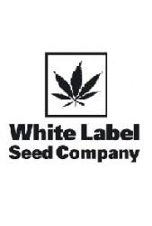 Semillas Sensi White Label Regulares ¡Cómpralas desde la cama!
