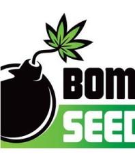 Bomb Seeds CBD