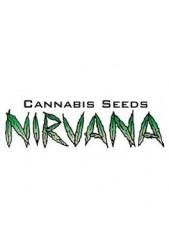 Comprar semillas Nirvana Autoflorecientes Baratas