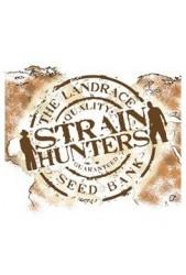 Comprar semillas Strain Hunters Seeds autoflorecientes baratas
