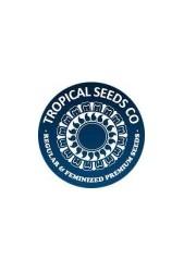 Semillas cannabicas Tropical Seeds CBD ¡Cómpralas ahora!
