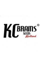 Kc Brains Seeds ® Las Mejores Semillas de Marihuana Feminizadas
