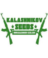 Semillas feminizadas Kalashnikov Seeds