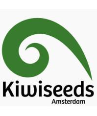 Semillas Kiwi Seeds Feminizadas