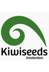 【Kiwi Seeds Semilla Feminizada】Todas las variedades del mercado ✔