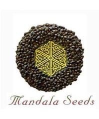 Semillas feminizadas Mandala Seeds