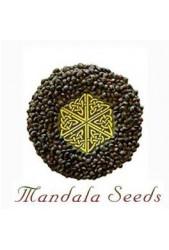 Mandala Seeds ® | Semillas Cannabicas | Gran colección ✔