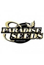 Comprar Semillas de Paradise Seeds Feminizadas Baratas