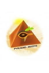 Pyramid Seeds © | Semillas de Marihuana | Grow Discreto ↑