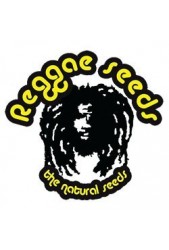 Reggae Seeds ▷ Banco de Feminizadas ✔ Compra Segura
