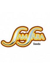 Samsara Seeds Feminizadas ↑↑ Venta Online | Pago Seguro ↑↑