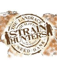 Semillas feminizadas Strainhunters online