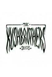 Kush Brothers Seeds ▷ En tu Grow de confianza | Discretos ✓