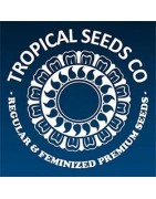 Semillas feminizadas Tropical Seeds