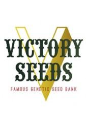 Semillas Victory Seeds ® Feminizadas de Gran Producción ✓