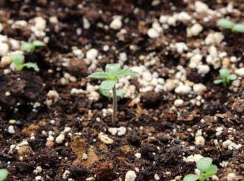 Abonos para cultivar en tierra