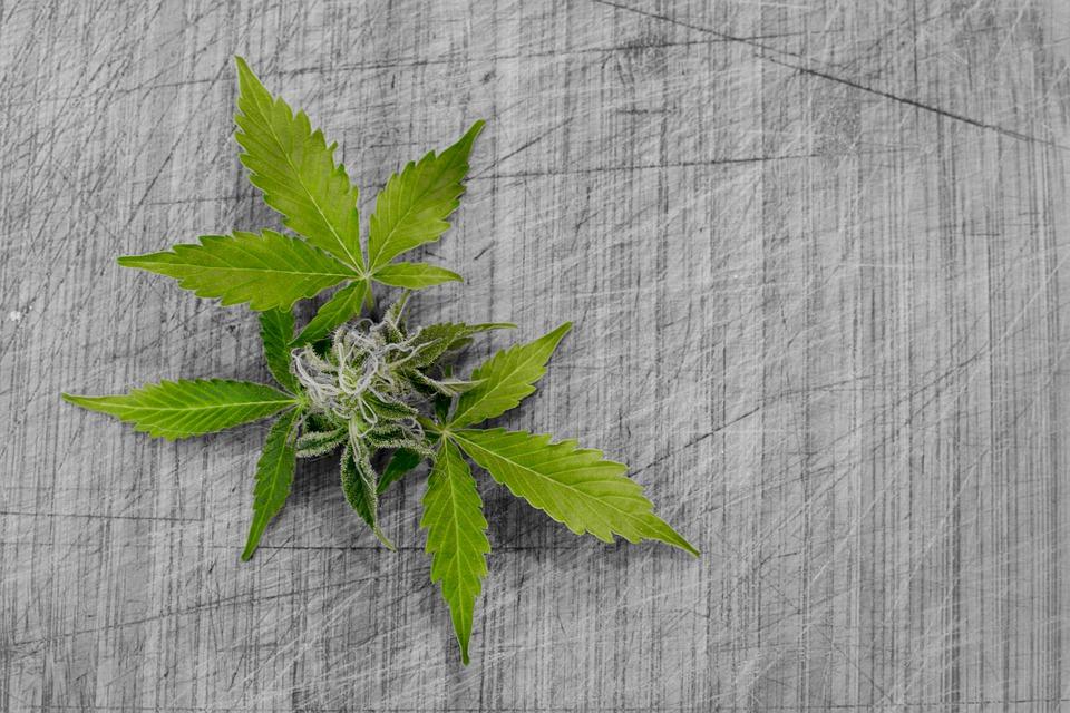 ¿Qué puedes hacer para germinar?