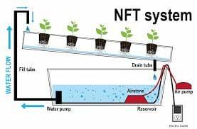 sistema de cultivo hidroponico