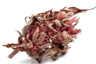 Características de las Semillas de Cannabis Cream Caramel