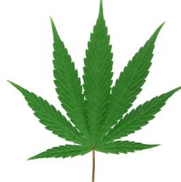 Catálogo completo de semillas de cannabis feminizadas Delta 9