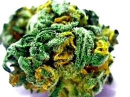 Más info sobre la variedad de marihuana Pakistan Valley