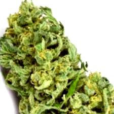 Comprar las Mejores Semillas de Marihuana Online