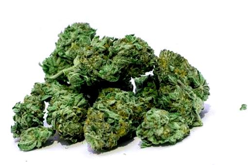 Compra de semillas de marihuana Big Skunk