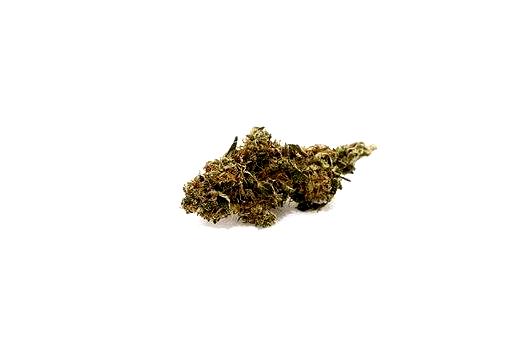 ¿Qué son las semillas Bomb Seeds autoflorecientes?