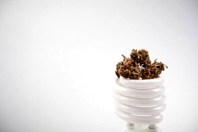 Comprar Semillas Victory Seeds Autoflorecientes